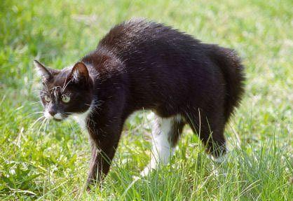 bristled tail