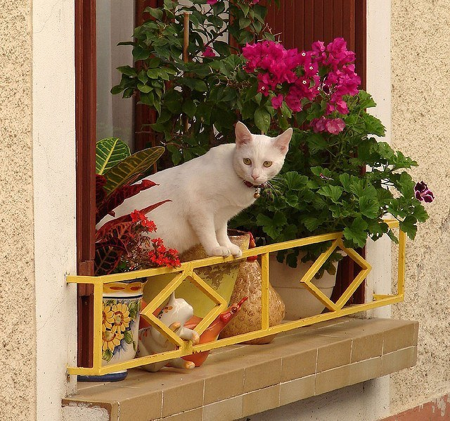 cat on non-protected balcony