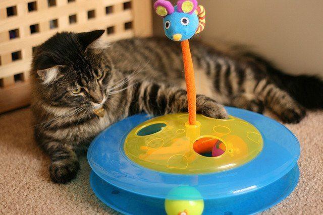 cat accessories - toys