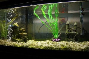 How to put together an aquarium