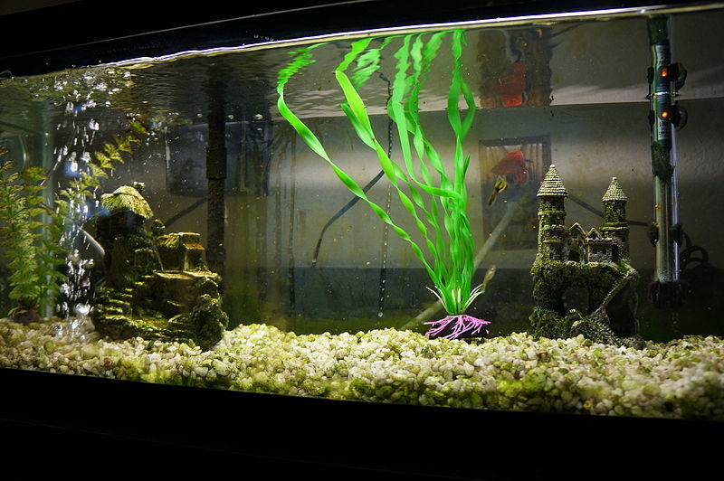 How to put together an aquarium