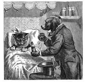 Canine Diseases
