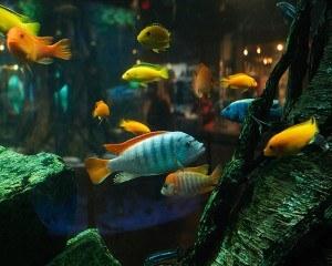 alimento para peces - una detallada introducción