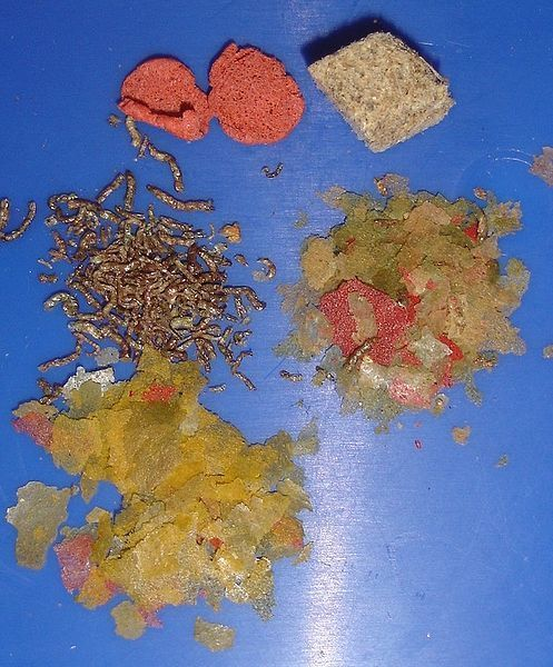 aquarium fish food - dry foods