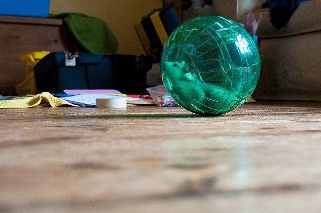 hamster´s ball