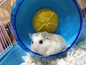 hamster wheels - how to choose the best