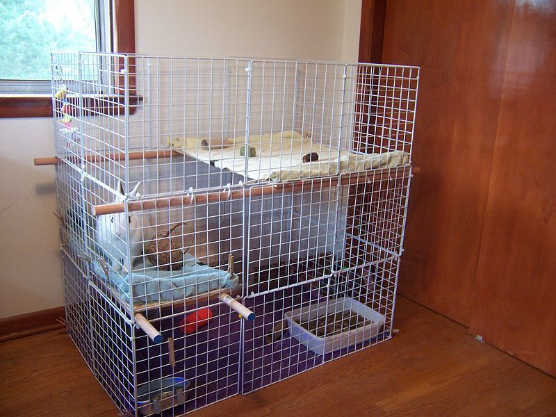 how to take care of a rabbit - big cage