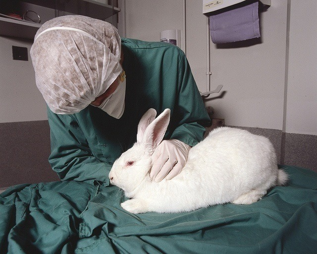 how to take care of a rabbit - visit to the vet