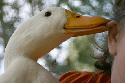 owner interacting with her duck