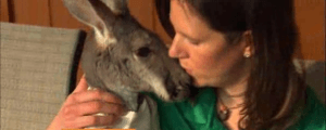 kangaroo and her owner