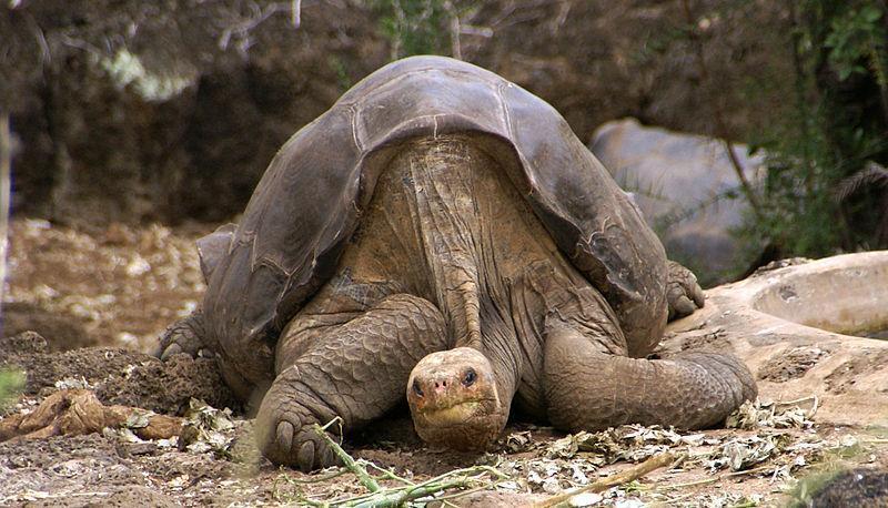 George in Galapagos Island