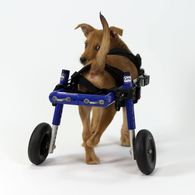 Ortocanis wheelchair